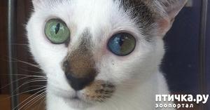 фото: Гетерохромия: каково жить с разными глазами.