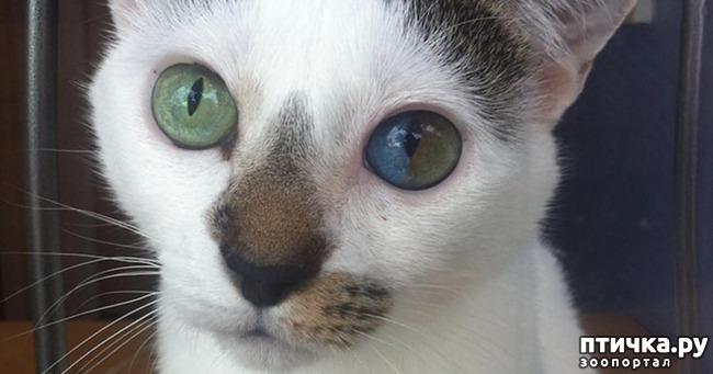 фото 1: Гетерохромия: каково жить с разными глазами.