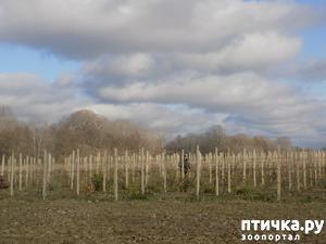 фото: Весна не за горами...