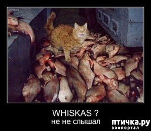 фото: Кот попал в свою мечту...