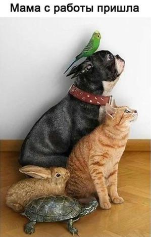 фото: Вот как встречают маму