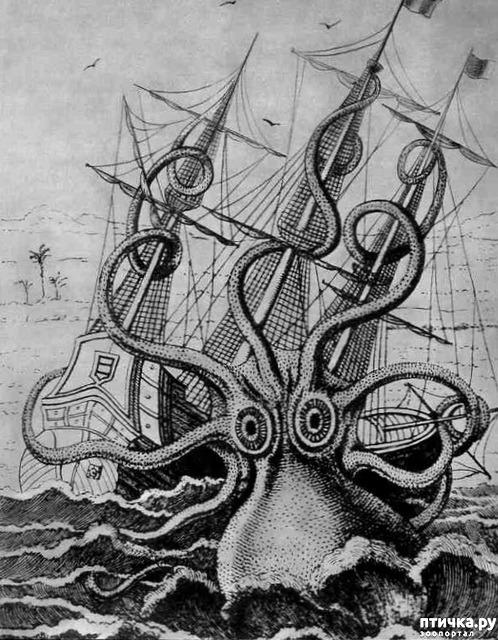 фото 2: Немного об осьминоге