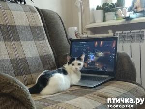 фото: Как тяжко жить в чужом доме...