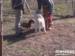фото: Им, собакам, не до драки!