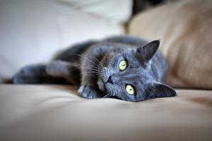 фото: Большое сердце серого кота Аякса