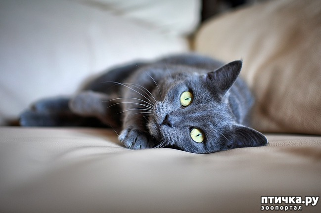 фото 1: Большое сердце серого кота Аякса