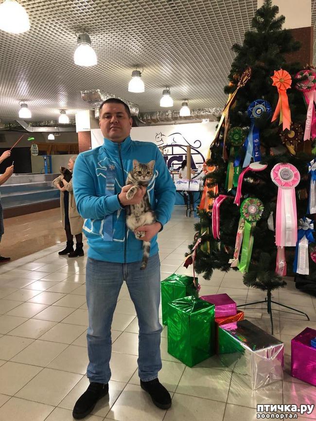 фото 2: Выставка TICA в Галерее Мир кошек 2-3 февраля.