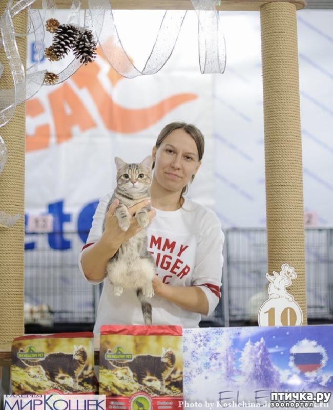 фото 5: Выставка TICA в Галерее Мир кошек 2-3 февраля.
