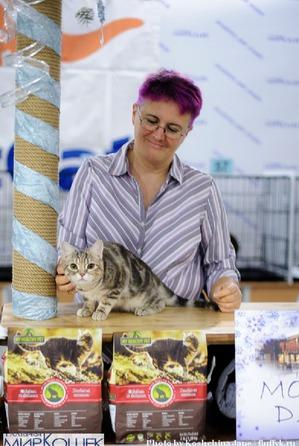 фото: Выставка TICA в Галерее Мир кошек 2-3 февраля.