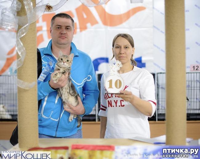 фото 6: Выставка TICA в Галерее Мир кошек 2-3 февраля.