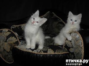 фото: Помет К. Кристал и Карат.
