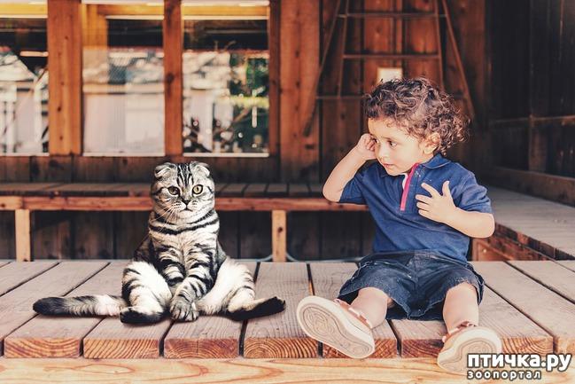 фото 7: Дети и животные. Часть вторая. Кого выбирать?