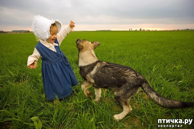 фото 8: Дети и животные. Часть вторая. Кого выбирать?