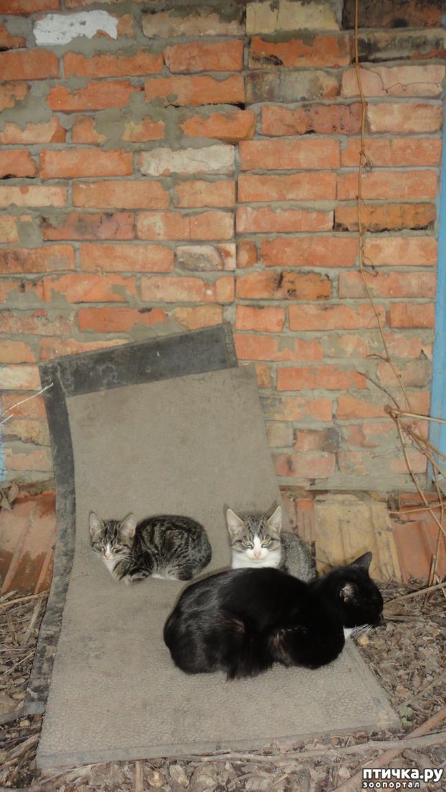 фото 2: Пакостные кошки и проворная хозяйка