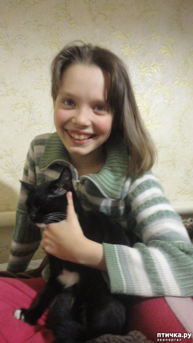 фото 1: Пакостные кошки и проворная хозяйка