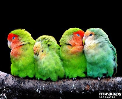 фото 2: Дети и животные. Часть третья. Дети и птицы