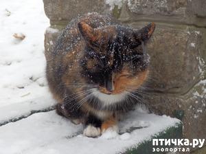 фото: Пожалейте зверей в мороз.