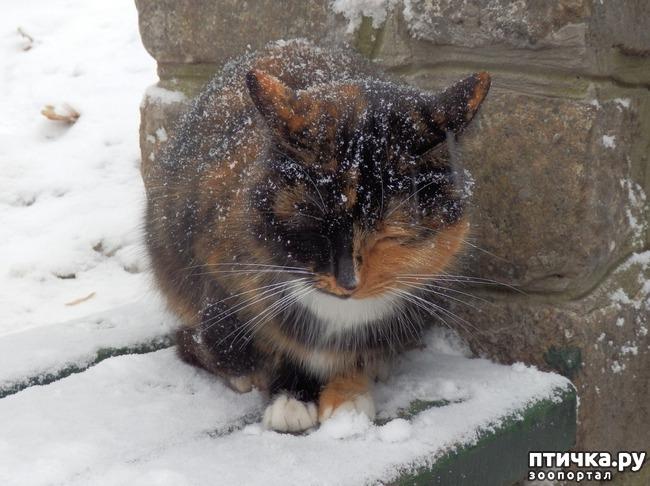 фото 1: Пожалейте зверей в мороз.