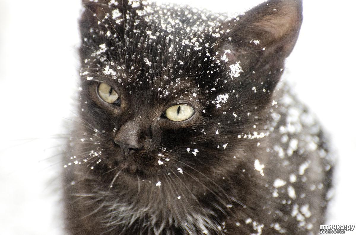 Картинки по запросу звери в мороз фото