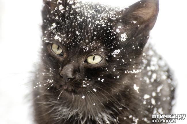 фото 2: Пожалейте зверей в мороз.