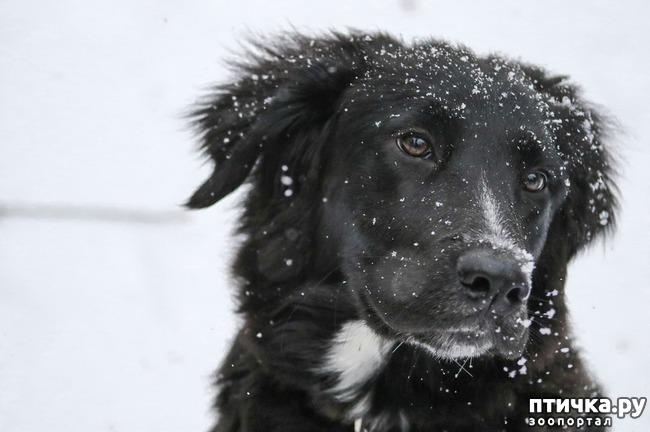 фото 3: Пожалейте зверей в мороз.