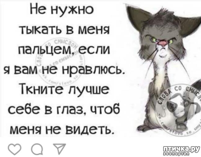 фото 8: Очередная кляуза на кота - террориста