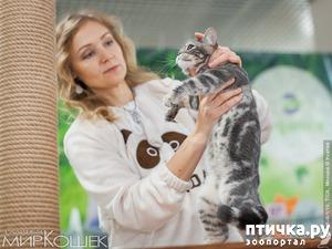 фото: Наши девочки на выставке TICA в Галерее Мир кошек 5-6 января