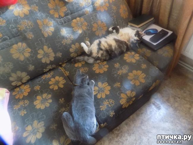 фото 2: Очередная кляуза на кота - террориста