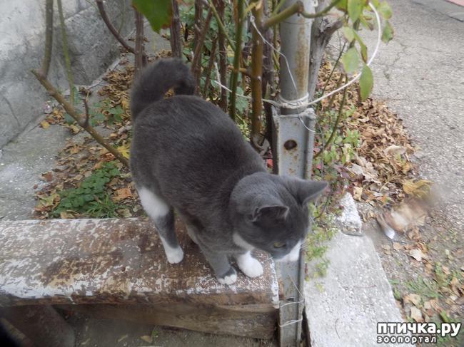 фото 4: Очередная кляуза на кота - террориста