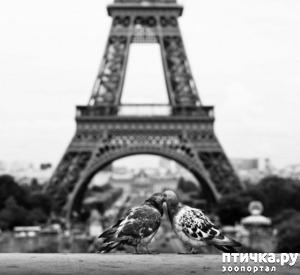 фото: Поцелуйчики.