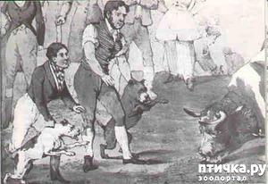 фото: Слово о бойцовских собаках