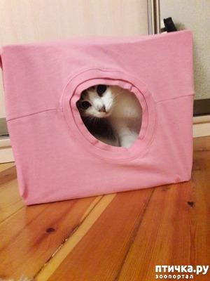 фото: Домик для кота за 5 минут)))