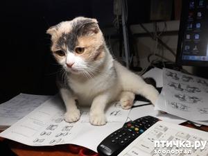 фото: Кошки и их группы крови