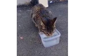 фото: Кошка на три недели застряла в вентиляционной шахте симферопольской многоэтажки