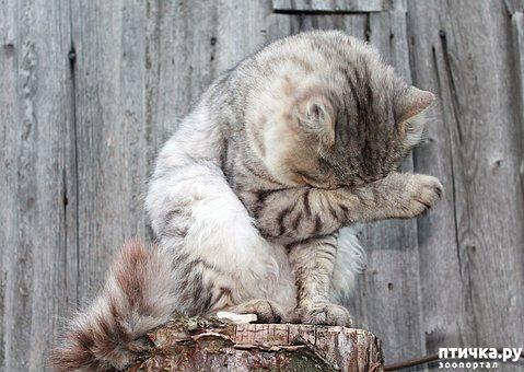фото 3: Где поставить лоток для кошки?