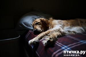 фото: Можно ли разрешать собаке спать в хозяйской постели?