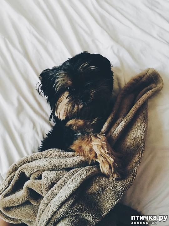фото 2: Можно ли разрешать собаке спать в хозяйской постели?