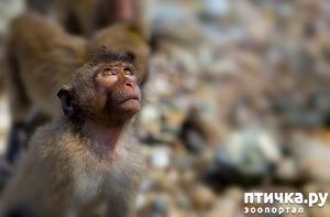 фото: Животные в молитве