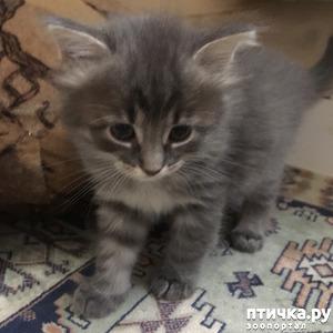 фото: Серенький котенок уехал домой