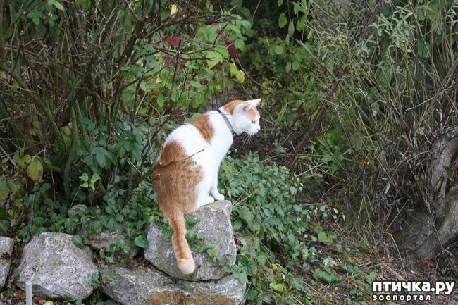 фото 8: Мой кот Пинат
