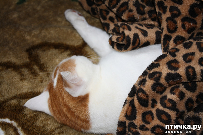 фото 10: Мой кот Пинат