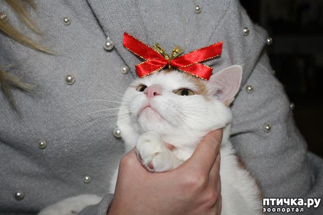 фото 12: Мой кот Пинат