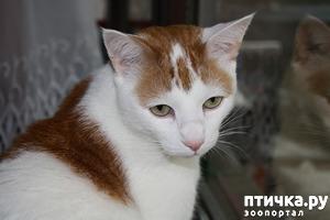 фото: Мой кот Пинат
