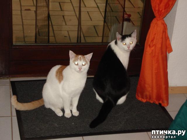 фото 2: Мой кот Пинат