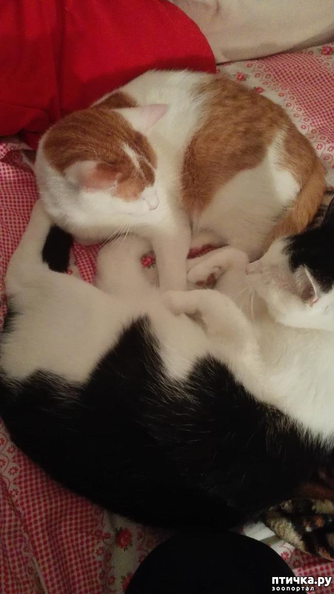 фото 3: Мой кот Пинат
