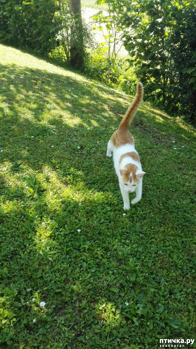фото 4: Мой кот Пинат
