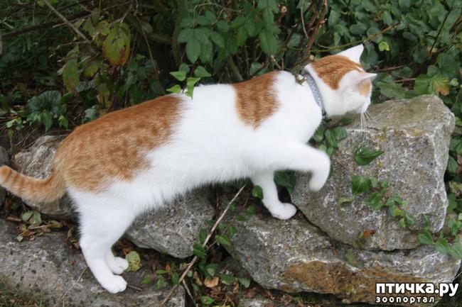 фото 7: Мой кот Пинат