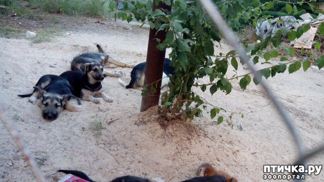 фото 1: Еще один щенок нашел дом