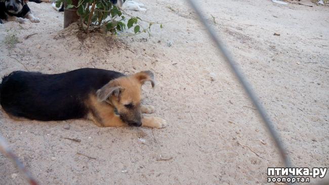 фото 2: Еще один щенок нашел дом