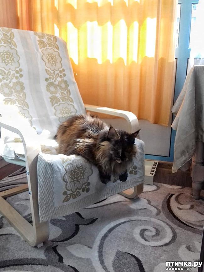 фото 2: Кресло